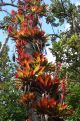 tree with coloured bromelia's